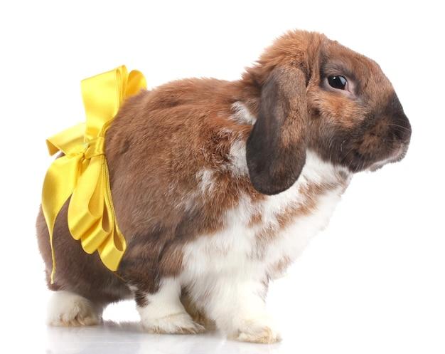 Вислоухий кролик с желтым бантом на белом