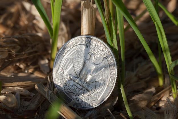 Потерянная и лежащая с растущей пшеницей монета в четверть доллара сша
