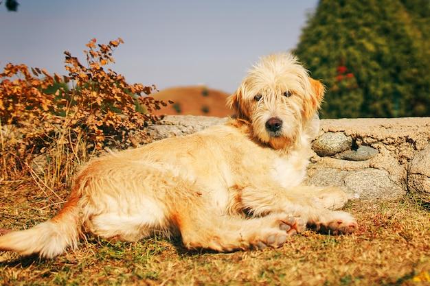 Потерянная собака лежа