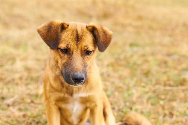 Потерянная собака грустная