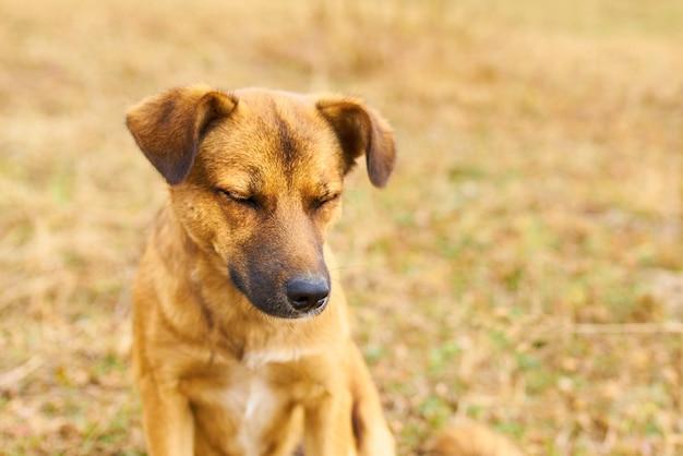 かわいい犬を失った
