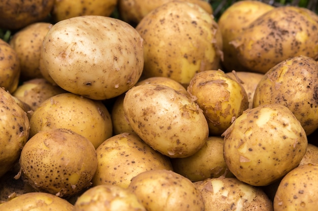 Lot of fresh potatoes close up