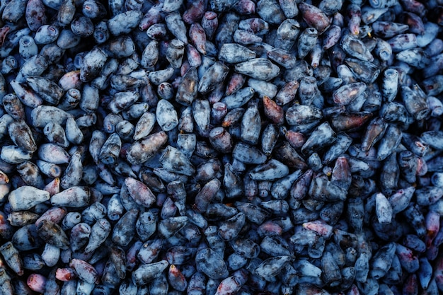 Lot of fresh ripe honeysuckle berries, surface
