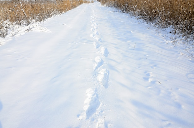 A lot of human tracks leave into the distance on the snow-covered road