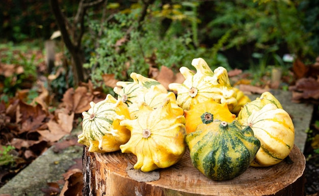 A lot of mini colorful pumpkin on the autumn at outdoor farmers market