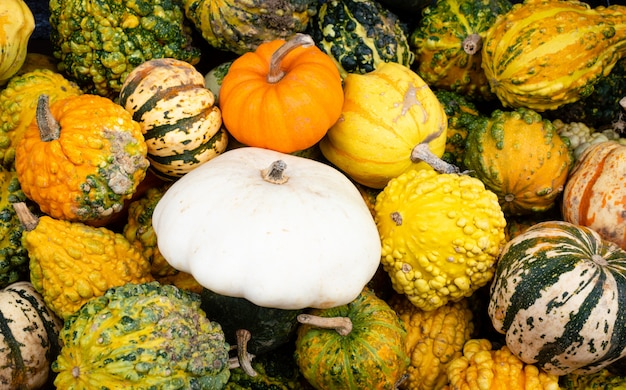 A lot of mini colorful pumpkin on the autumn at outdoor farmers market.