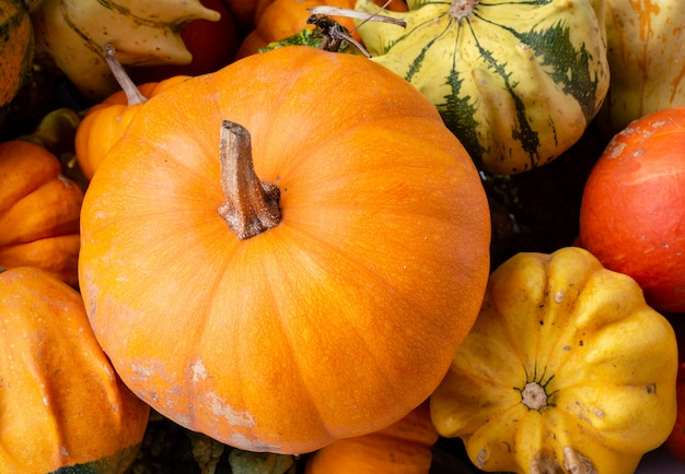 A lot of mini colorful pumpkin on the autumn at outdoor farmers