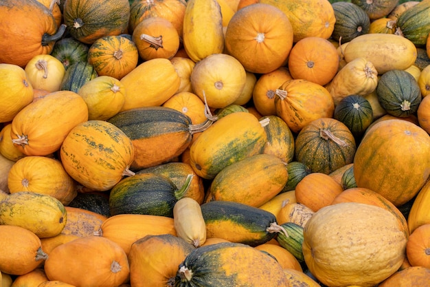 A lot of mini pumpkin at outdoor farmers market.