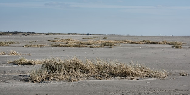 바다의 모래 지역에 많은 수풀과 마른 풀