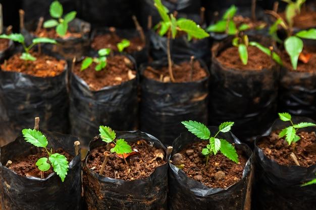 小さな植物が入ったさまざまなプラスチック製の苗バッグがたくさん-種まき栽培