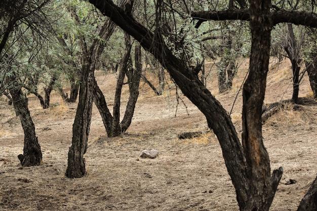 日中の森の緑の葉を持つ多くの古い木