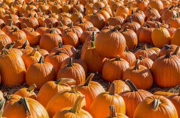 ファーマーズマーケットのオレンジ色のカボチャがたくさん秋の背景