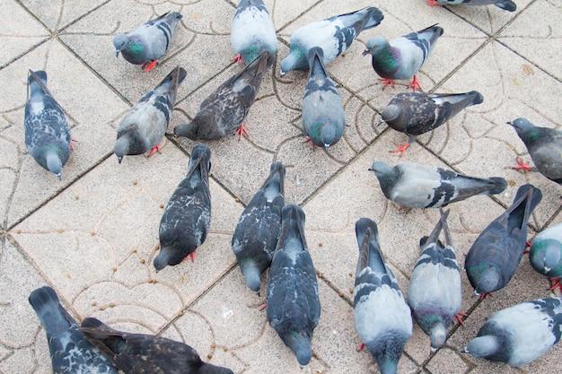 방콕, 태국에서 바닥에 비둘기를 많이