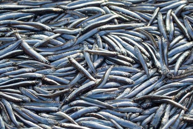 생 멸치 생선을 많이. 평면도. 바다 음식 배경 테마.