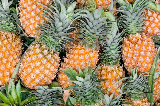 A lot of pineapple fruit for background.
