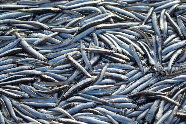 Lot of raw fresh anchovies fishes. top view. sea food background theme.
