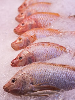 A lot of red snapper fishes on ice