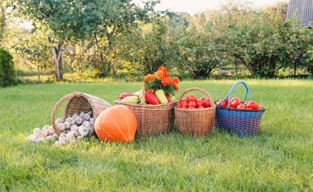 A lot of ripe,beautiful vegetables are in baskets on the lawn