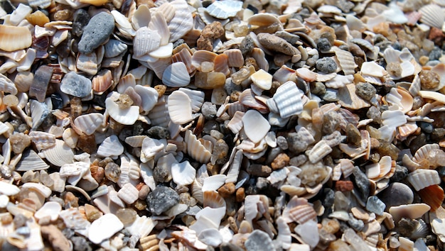 A lot of shells and stones on sand beach background close-up.