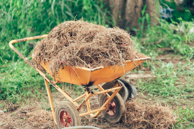 A lot of straw in wheelbarrow