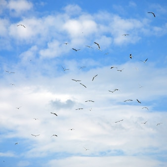 A lot of white gulls fly in the cloudy blue sky