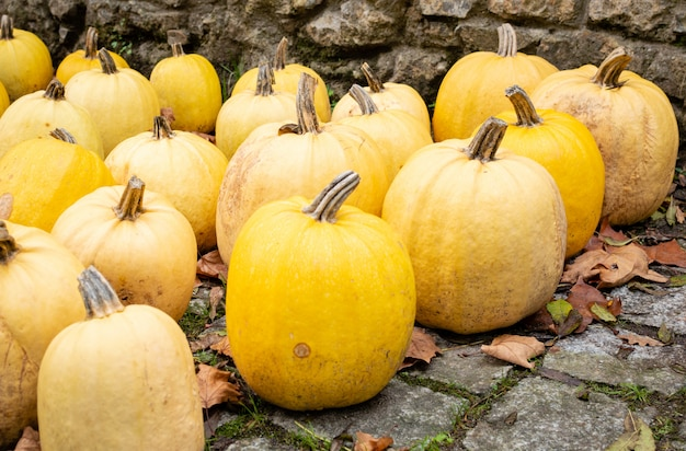 A lot of yellow pumpkin on the autumn at outdoor farmers