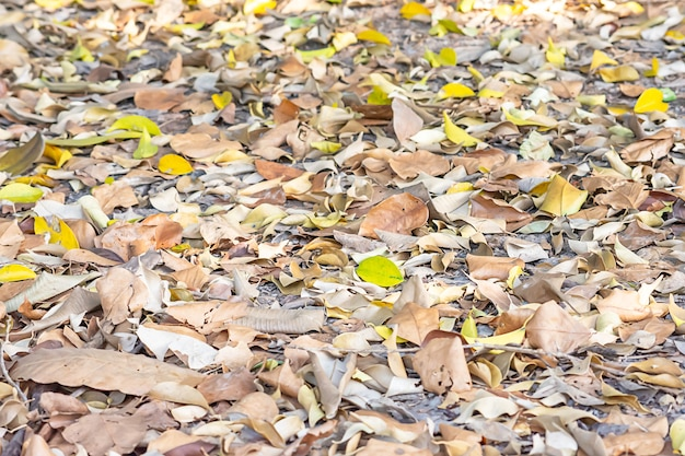 Lots of dry leaves on the ground.