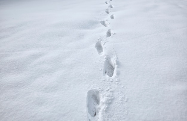 Lots of footsteps on the snow