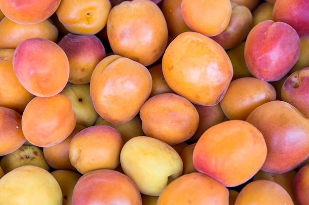 Lots of fresh apricots fruits plucked from branch of  tree.