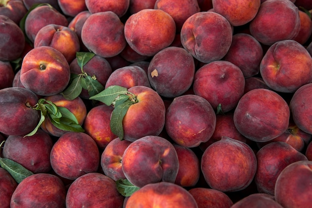 Lots of fresh peaches fruits plucked from branch of orange tree.
