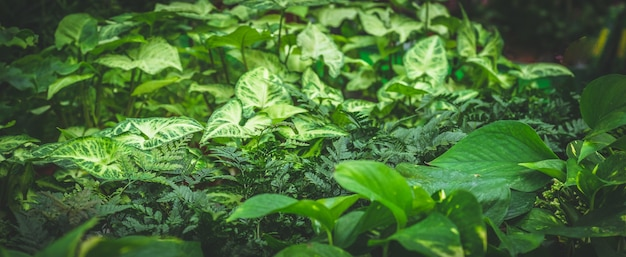 Lots of green plants. plants green background. gardening in greenhouse. botanical garden, flower farming, horticultural industry concept