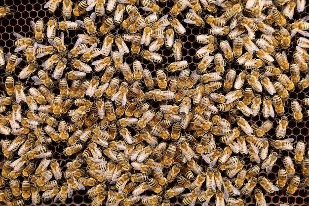 たくさんのハチの虫。ミツバチのクローズアップ。