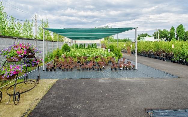 園芸用品センターで販売されているたくさんの緑の植物