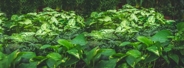 緑の植物がたくさん。植物の緑の背景。温室でのガーデニング。植物園、花の栽培、園芸産業のコンセプト
