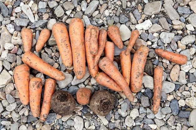 Много очищенной сырой моркови и свеклы лежат на земле, подготовленной для приготовления, овощи крупным планом.