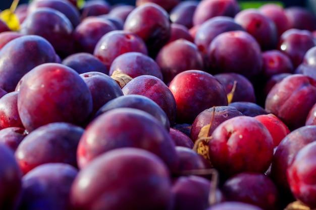 Много слив. слить в ящик. домашняя слива. домашние садовые ягоды. фиолетовый фрукт
