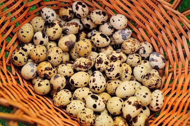 籐のバスケットにウズラの卵がたくさん