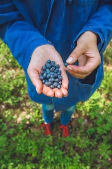 若い女の子の手にたくさんの熟した、新鮮なブルーベリー。夏の森にクローズアップ