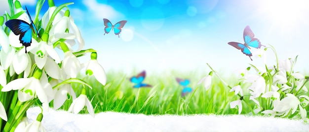 春の最初の日に蝶が舞うスノー ドロップがたくさん
