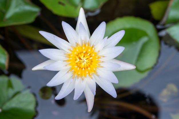 연못에 연꽃