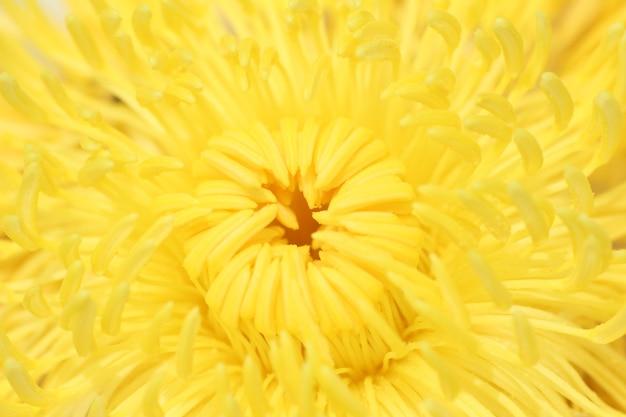 Пыльца цветов лотоса