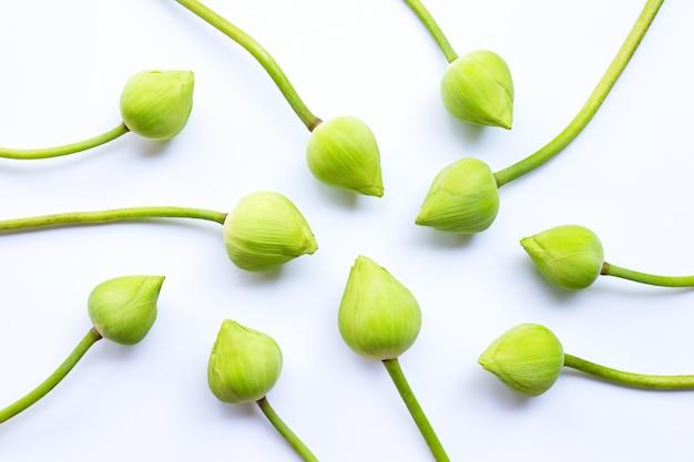 ハスの花。上面図
