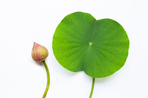 Lotus leaf on white
