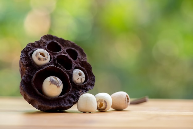 Lotus pod and seeds on nature.