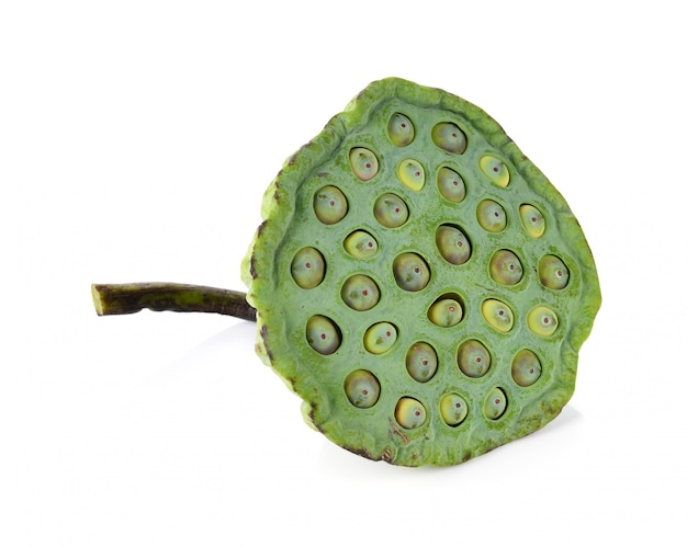 Lotus seeds green isolated on white.