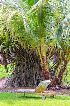 Lounger under palm in the hotel near pool at seychelles