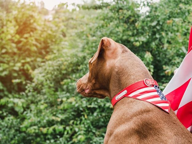 Симпатичный, симпатичный щенок коричневого окраса. крупный план