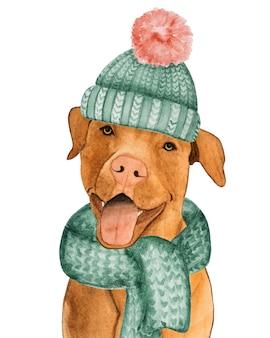 チョコレート色の愛らしい、かわいい子犬。閉じる。ケア、教育、服従訓練、ペットの飼育の概念