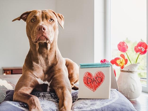 초콜릿 색상의 사랑스럽고 예쁜 강아지, 하트가 그려진 노트북 및 비문 dad. 근접 촬영, 실내, 흰색 배경입니다. 가족, 친척, 친구 및 동료를 축하합니다