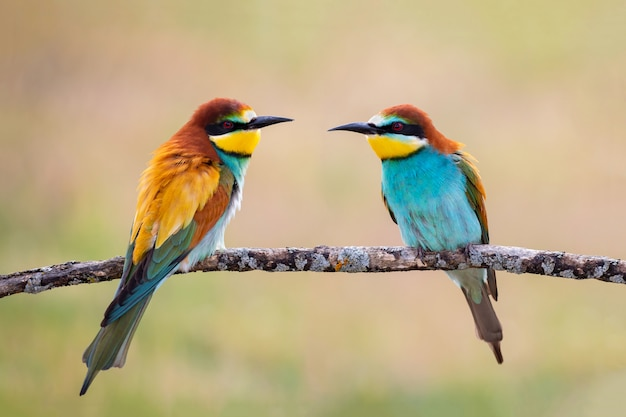 Love on the branch